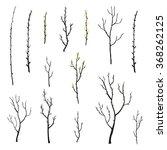 Hand Drawn Twigs With Buds ...