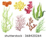 Set Of Watercolor Seaweed And...