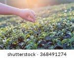 close up woman hand on tea... | Shutterstock . vector #368491274
