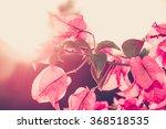 Image Of Bougainvillea Flowers...