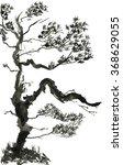 pine isolated on white...   Shutterstock . vector #368629055