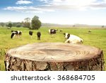 Rural Landscape Of Cows And...