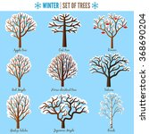 set of winter trees on white... | Shutterstock .eps vector #368690204