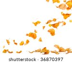 Autumn Leaves Falling To The...