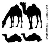 Camel Silhouette Isolated