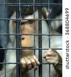 Monkey Looking Through Zoo Cel...