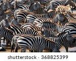 big herd of zebras standing in... | Shutterstock . vector #368825399