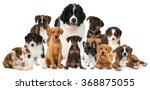 group of puppies | Shutterstock . vector #368875055