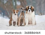 Stock photo group of three funny puppies in winter 368886464