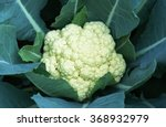 Cauliflower Fresh From The Tre...