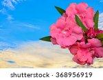 Beautyful Sweet Oleander Flowe...