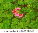 beautiful pink flowers among... | Shutterstock . vector #368958545