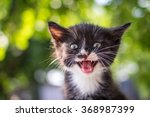 Stock photo funny little cat with a happy expression outdoor animal love and care concept 368987399