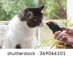 Stock photo man offers toy to a cat 369066101