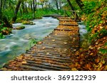 Deep Forest Wooden Pathway Ove...