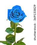 Blue Rose Flower  Green Leaves...