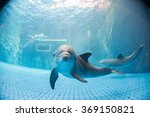 dolphin underwater in aquarium... | Shutterstock . vector #369150821