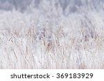 blurred winter background  dry... | Shutterstock . vector #369183929