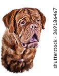 Drawing Breed Dog  Dogue De...