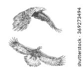 freehand sketch of flying eagle.... | Shutterstock .eps vector #369273494