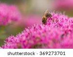 Honeybee Collecting Nectar Fro...