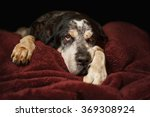 Old Senior Retired Bluetick...