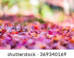 red leaves of japanese maypole... | Shutterstock . vector #369340169