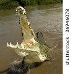 Costa Rican American Crocodile  ...