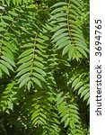 close up view of leaves at... | Shutterstock . vector #3694765