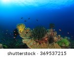 coral and fish on underwater... | Shutterstock . vector #369537215