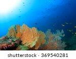 coral reef underwater sea ocean ... | Shutterstock . vector #369540281