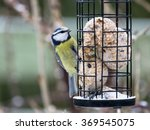 Blue Tit Sitting On Bird Feede...