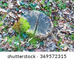 Old Tree Stump In The Forest...