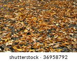 The Fallen Down Leaves Of A...