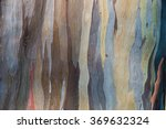 The Color Of The Bark