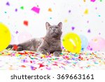 cat is having a party | Shutterstock . vector #369663161