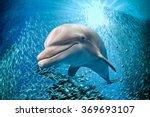 Dolphin Underwater On Ocean...