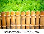 garden vegetable.   Shutterstock . vector #369732257