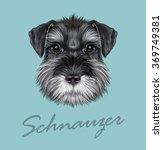 Schnauzer Dog Portrait. Vector...
