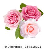 rose flowers bunch isolated on... | Shutterstock . vector #369815321