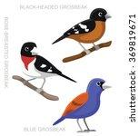 Bird Grosbeak Set Cartoon...