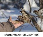 house sparrow  passer... | Shutterstock . vector #369824705