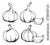 garlic illustration  vector set | Shutterstock .eps vector #370058714