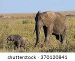Stock photo baby elephant it goes close to his mother africa kenya tanzania serengeti maasai mara an 370120841