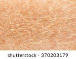 dog fur texture | Shutterstock . vector #370203179