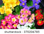 close up colorful spring... | Shutterstock . vector #370206785