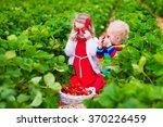 Children Pick Strawberries....
