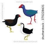 Bird Swamphen Set Cartoon...