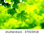 green leaves background in a...   Shutterstock . vector #37023418