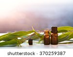 eucalyptus aromatherapy...   Shutterstock . vector #370259387